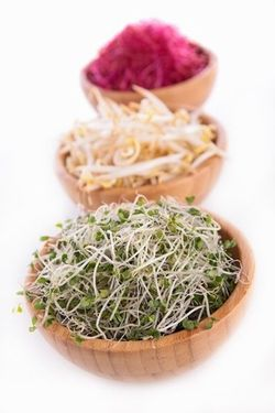 3-sprouts1.jpg