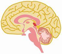 brain_12.jpg